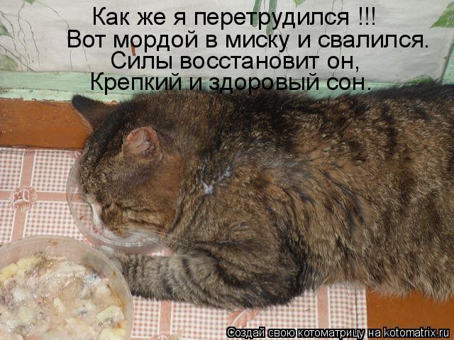 Котоматрица: Как же я перетрудился !!! Вот мордой в миску и свалился. Силы восстановит он, Крепкий и здоровый сон.