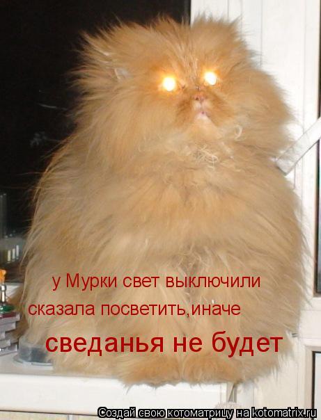 Котоматрица: у Мурки свет выключили сказала посветить,иначе сведанья не будет