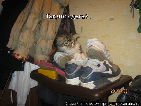Котоматрица: Так,что одеть?..