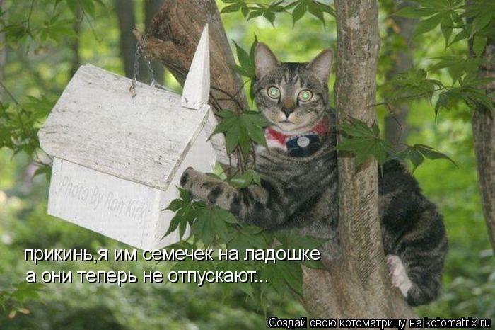 Котоматрица: прикинь,я им семечек на ладошке а они теперь не отпускают...