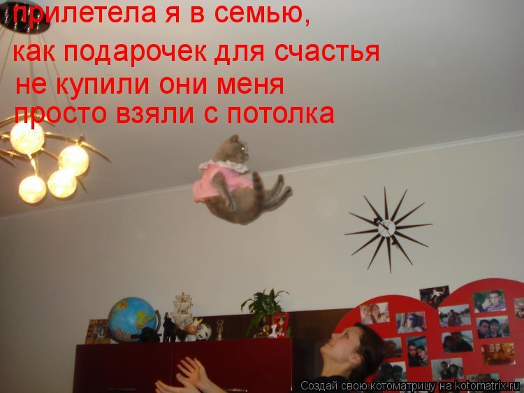 Котоматрица: прилетела я в семью, как подарочек для счастья не купили они меня просто взяли с потолка