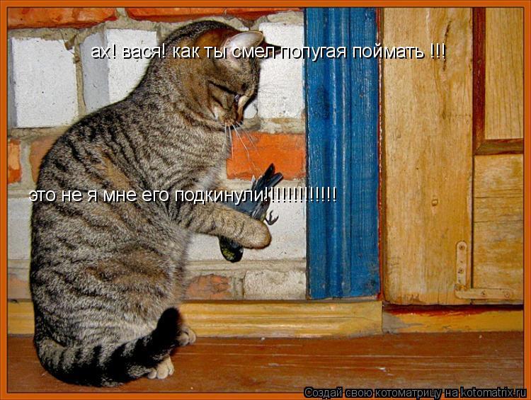 Котоматрица: ах! вася! как ты смел попугая поймать !!!  это не я мне его подкинули!!!!!!!!!!!!!