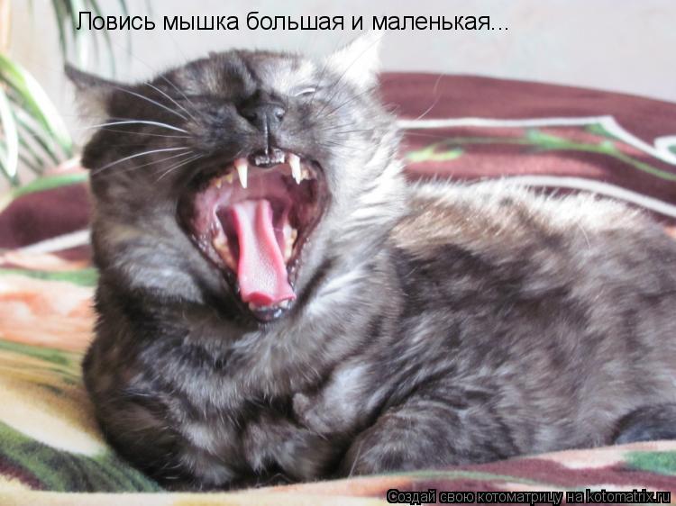 Котоматрица: Ловись мышка большая и маленькая...