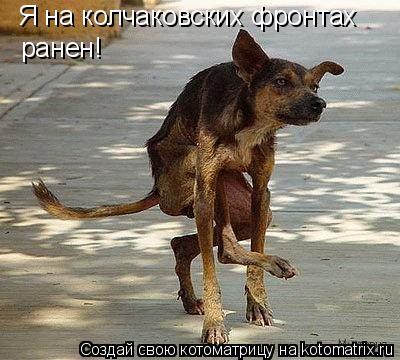 Котоматрица: Я на колчаковских фронтах ранен!