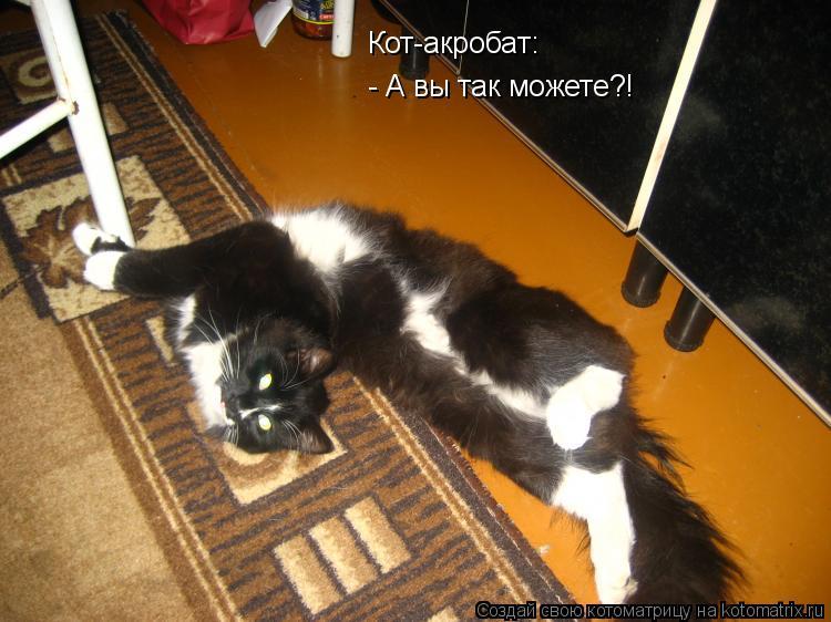 Котоматрица: Кот-акробат: - А вы так можете?!