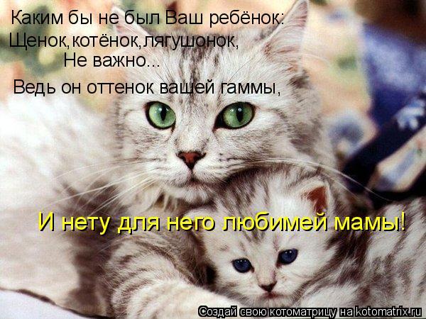 Котоматрица: Каким бы не был Ваш ребёнок: Щенок,котёнок,лягушонок, Не важно... Ведь он оттенок вашей гаммы, И нету для него любимей мамы!