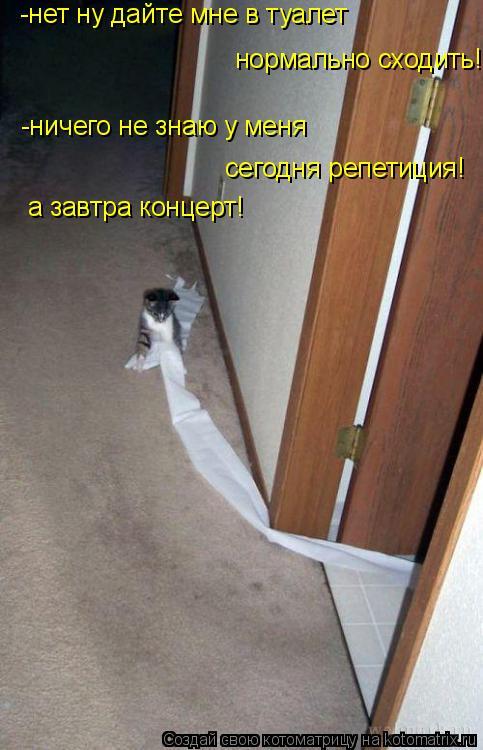 Котоматрица: -нет ну дайте мне в туалет  нормально сходить! -ничего не знаю у меня  сегодня репетиция! а завтра концерт!