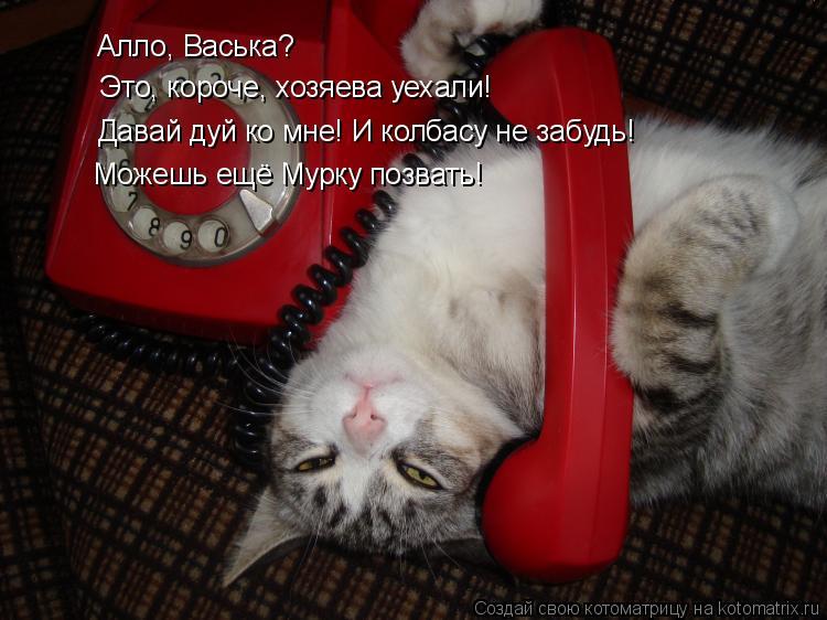 Котоматрица: Алло, Васька?  Это, короче, хозяева уехали! Давай дуй ко мне! И колбасу не забудь! Можешь ещё Мурку позвать!