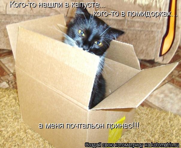 Котоматрица: Кого-то нашли в капусте... кого-то в помидорках... а меня почтальон принес!!!