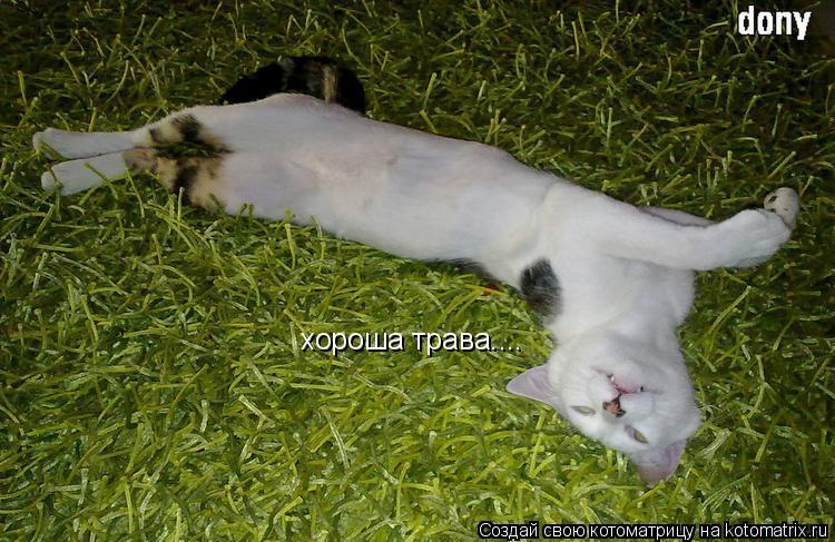 Котоматрица: хороша трава....
