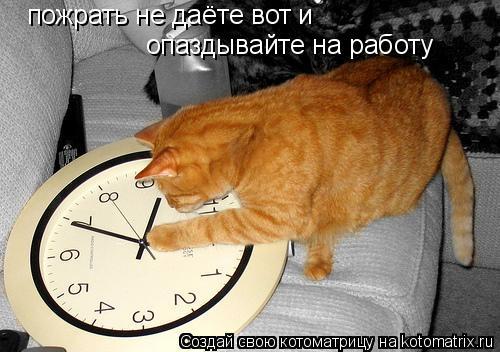 Котоматрица: пожрать не даёте вот и  опаздывайте на работу