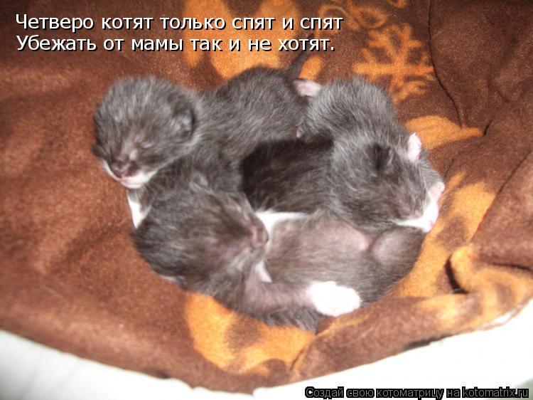 Котоматрица: Четверо котят только спят и спят  Убежать от мамы так и не хотят.