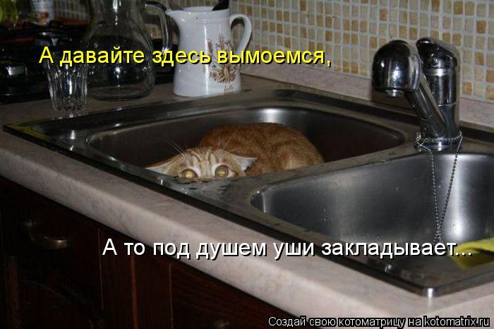 Котоматрица: А давайте здесь вымоемся, А то под душем уши закладывает...