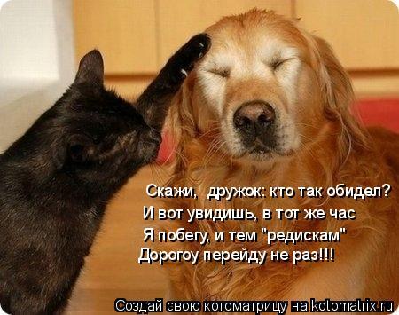 """Котоматрица: Скажи,  дружок: кто так обидел? И вот увидишь, в тот же час Я побегу, и тем """"редискам"""" Дорогоу перейду не раз!!!"""