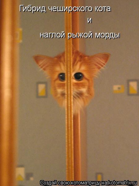 Котоматрица: Гибрид чеширского кота и наглой рыжой морды