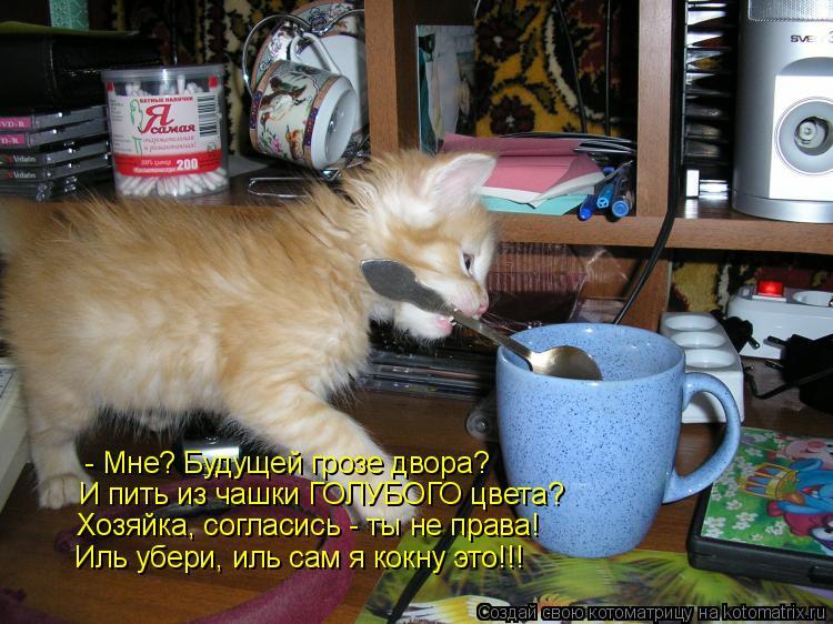 Котоматрица: - Мне? Будущей грозе двора? И пить из чашки ГОЛУБОГО цвета? Хозяйка, согласись - ты не права! Иль убери, иль сам я кокну это!!!