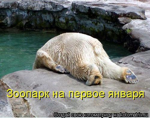 Котоматрица: Зоопарк на первое января