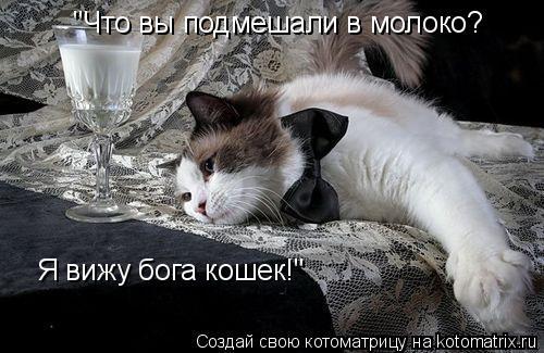 """Котоматрица: """"Что вы подмешали в молоко? Я вижу бога кошек!"""""""