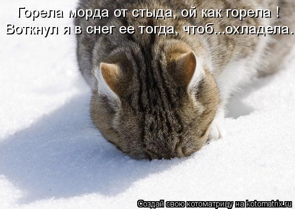Котоматрица: Горела морда от стыда, ой как горела ! Воткнул я в снег ее тогда, чтоб...охладела.