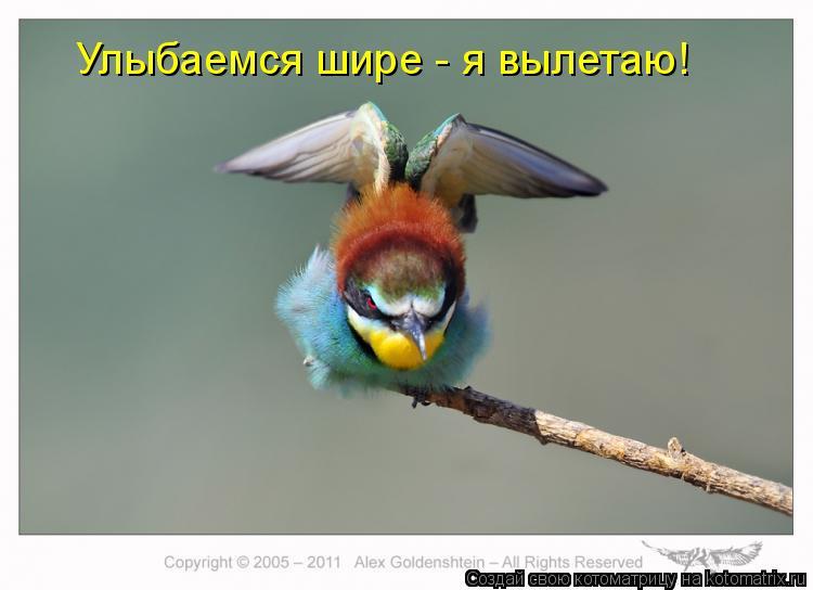 Котоматрица: Улыбаемся шире - я вылетаю!