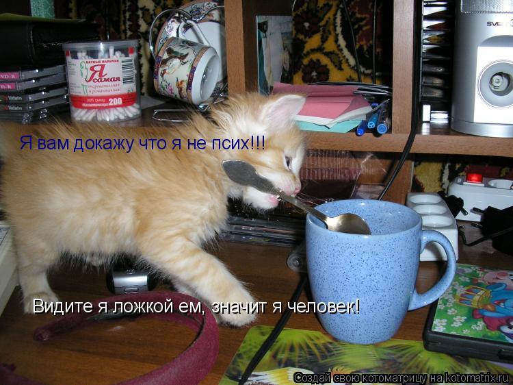 Котоматрица: Я вам докажу что я не псих!!! Видите я ложкой ем, значит я человек!