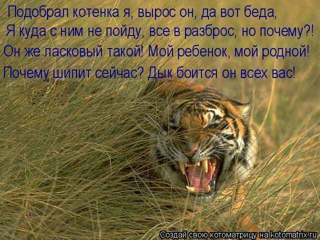 Котоматрица: Подобрал котенка я, вырос он, да вот беда, Я куда с ним не пойду, все в разброс, но почему?! Он же ласковый такой! Мой ребенок, мой родной! Почему