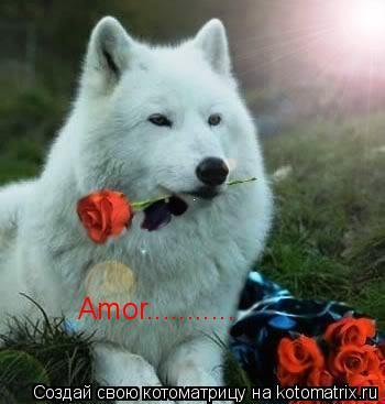 Котоматрица: Amor...........