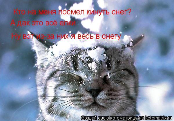 Котоматрица: Кто на меня посмел кинуть снег? А дак это всё елки Ну вот из-за них я весь в снегу