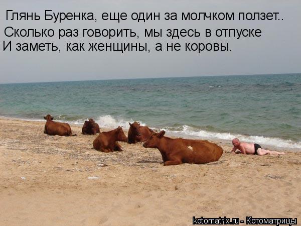 Котоматрица: Глянь Буренка, еще один за молчком ползет.. Сколько раз говорить, мы здесь в отпуске И заметь, как женщины, а не коровы.