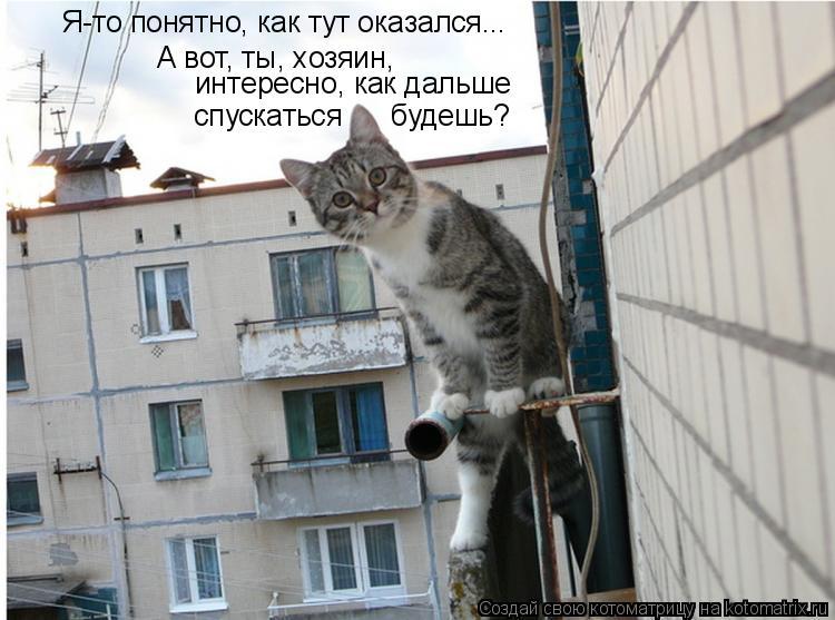 Котоматрица: Я-то понятно, как тут оказался... А вот, ты, хозяин, интересно, как дальше  спускаться      будешь?