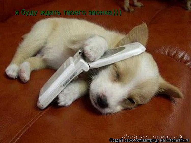 Котоматрица: я буду ждать твоего звонка)))