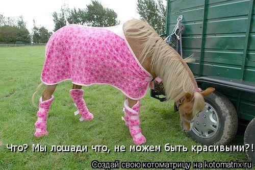 Котоматрица: Что? Мы лошади что, не можем быть красивыми?!