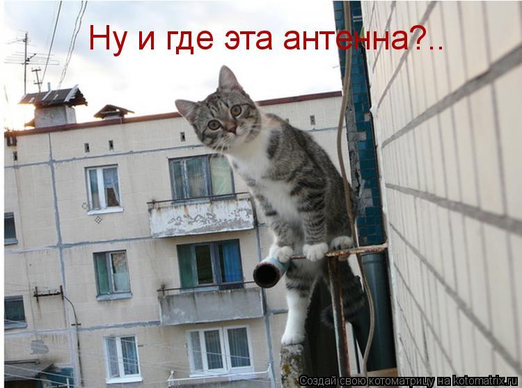 Котоматрица: Ну и где эта антенна?..
