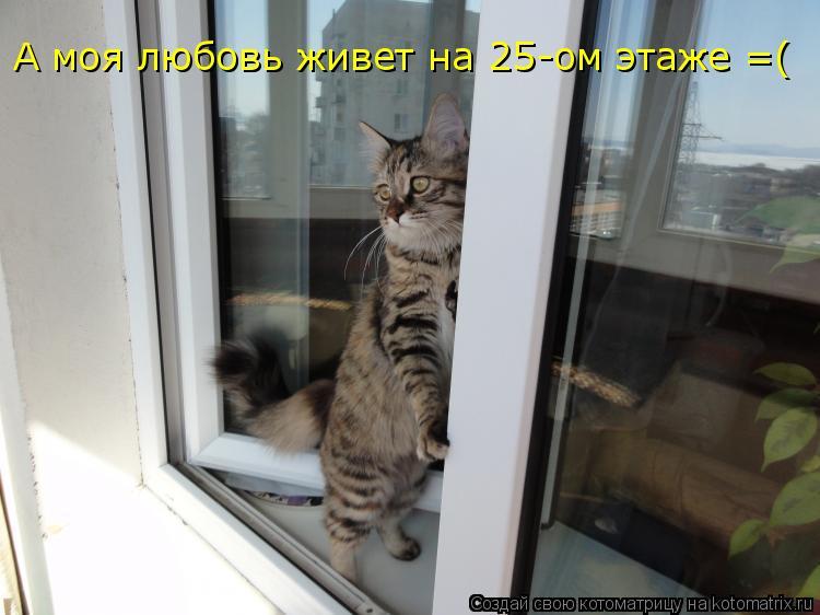 Котоматрица: А моя любовь живет на 25-ом этаже =(