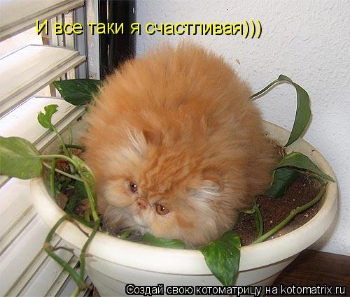 Котоматрица: И все таки я счастливая)))