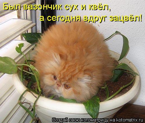 Котоматрица - Был вазончик сух и квёл,  а сегодня вдруг зацвёл!