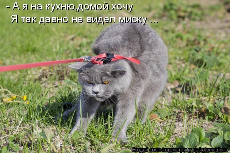 Котоматрица: - А я на кухню,домой хочу. Я так давно не видел миску ...