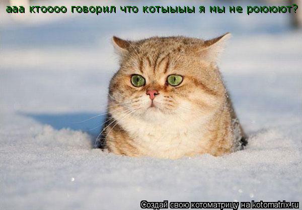 Котоматрица: ааа ктоооо говорил что котыыыы я мы не роююют?