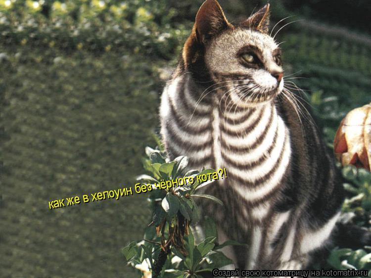 Котоматрица: как же в хелоуин без чёрного кота?!