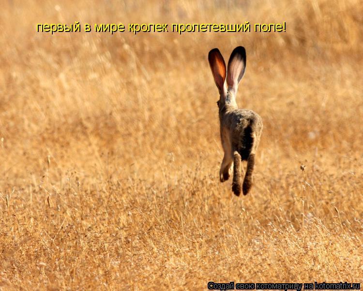 Котоматрица: первый в мире кролек пролетевший поле!