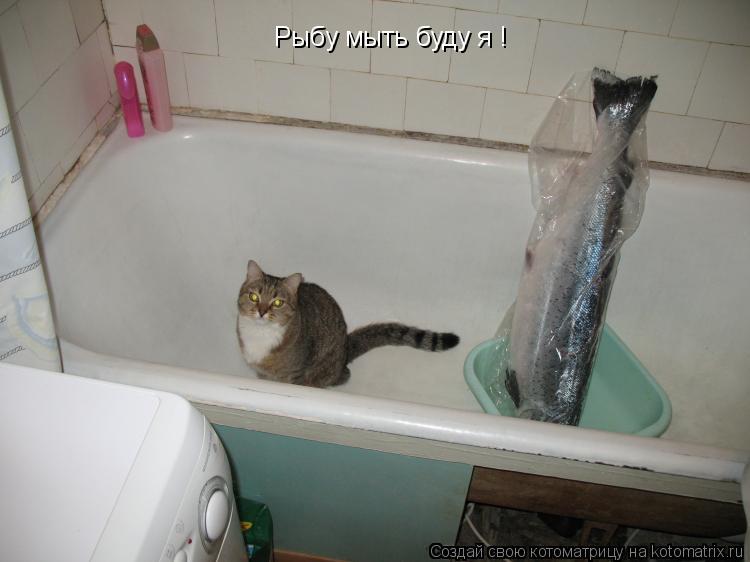 Котоматрица: Рыбу мыть буду я !