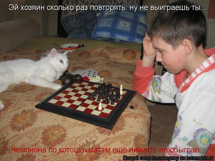 Котоматрица: Эй хозяин сколько раз повторять: ну не выиграешь ты... Чемпиона по котошахматам ещё нииикто не обыграл