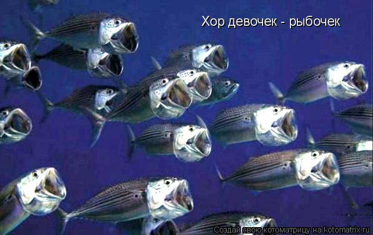 Котоматрица: Хор девочек - рыбочек