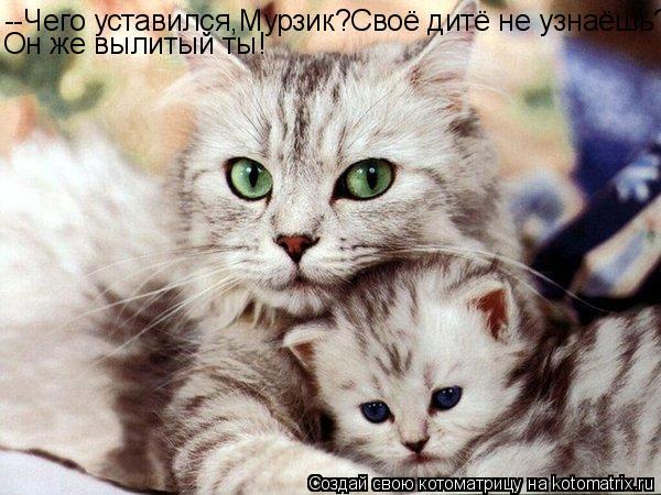 Котоматрица: --Чего уставился,Мурзик?Своё дитё не узнаёшь? Он же вылитый ты!