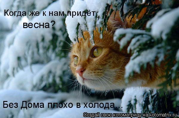 Котоматрица: Когда же к нам придёт  весна? Без Дома плохо в холода...