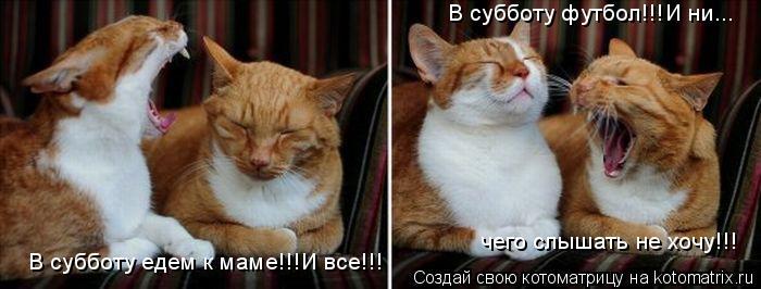 Котоматрица: В субботу едем к маме!!!И все!!! В субботу футбол!!!И ни... чего слышать не хочу!!!