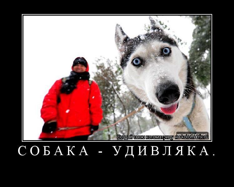 Котоматрица: Собака - удивляка.