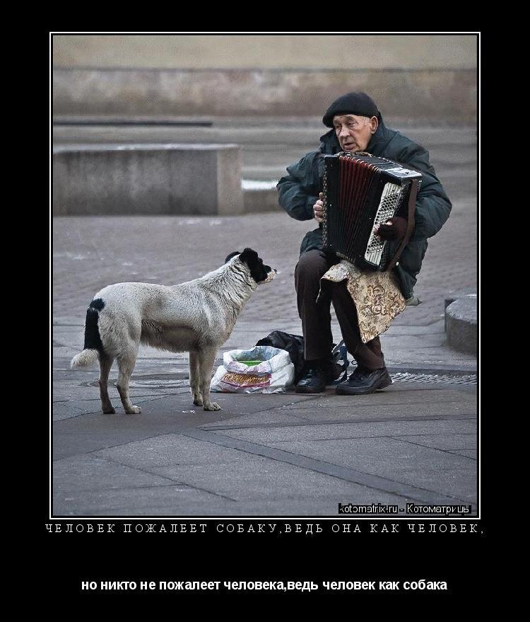 Котоматрица: Человек пожалеет собаку,ведь она как человек, но никто не пожалеет человека,ведь человек как собака