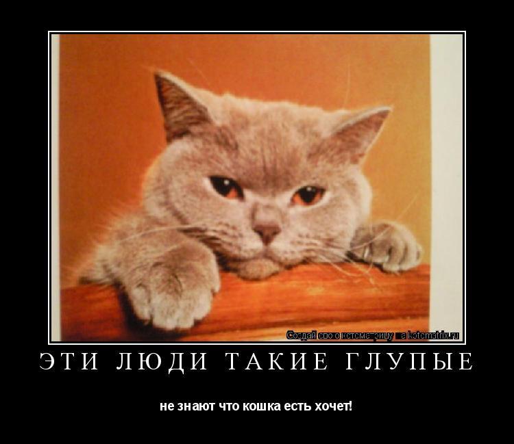 Котоматрица: эти люди такие глупые не знают что кошка есть хочет!