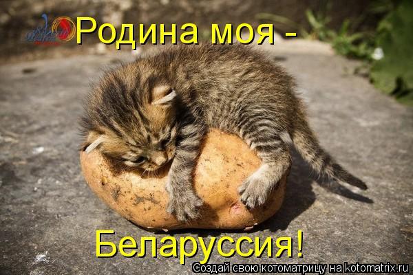Котоматрица: Родина моя - Беларуссия!